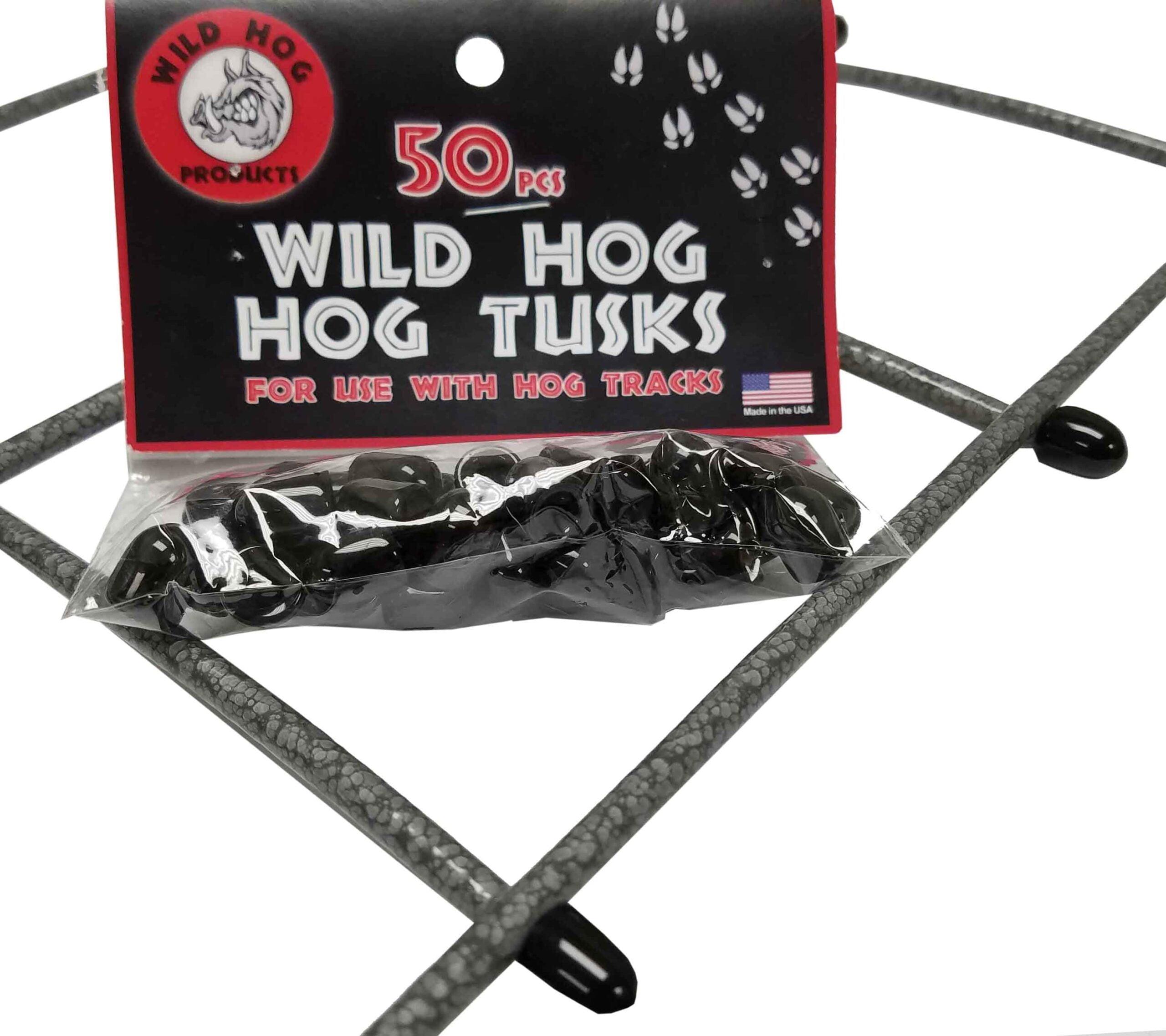 Wild Hog Tusks
